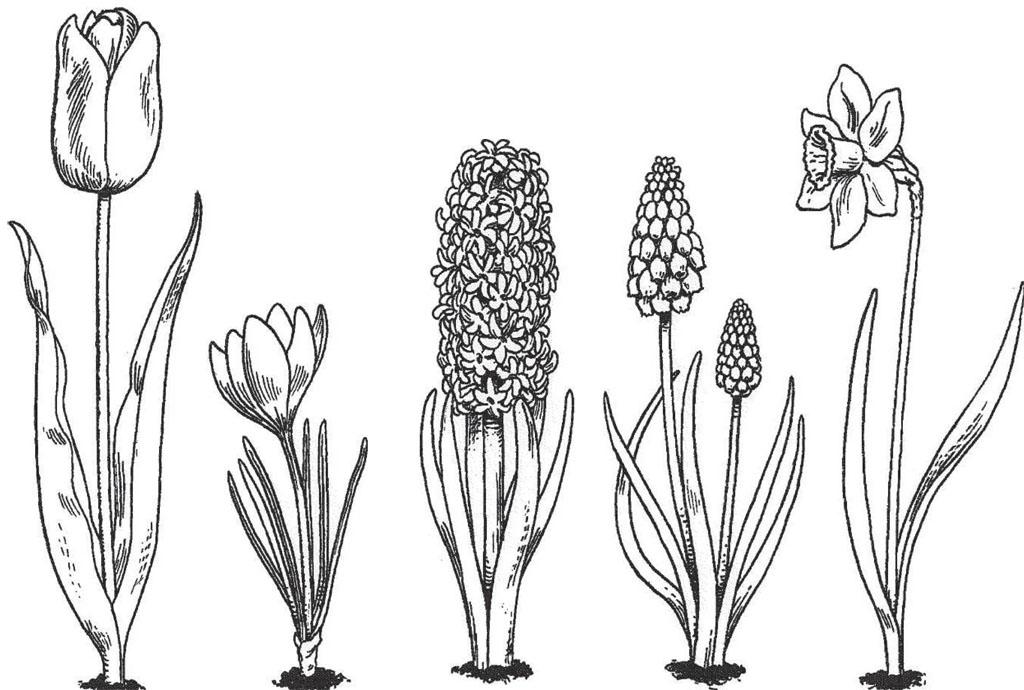 bol tot bloem kleurplaat 210 besten voorjaar met